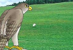 игры орел охотится на зайца