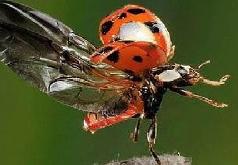 Игра Поиск цифр насекомые