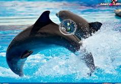 игры шоу дельфинов на двоих