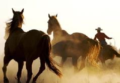Игра Ковбойские лошади: пазл-слайд