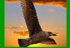 Игра Пятнашки Дикий орел