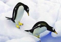 Игра Пазл Пингвины