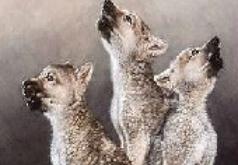 игры волчонок оборотень