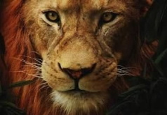 Игра Король Лев 2019 Пазл: Отец