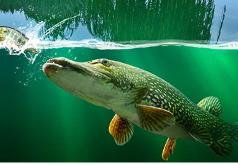игры рыбы 3д симулятор