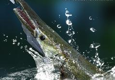 рыбалка на урале игра