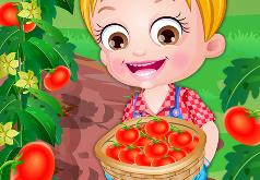 Игры Томатная ферма