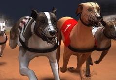 Игры Собачьи гонки